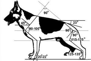 Рисунки немецких овчарок